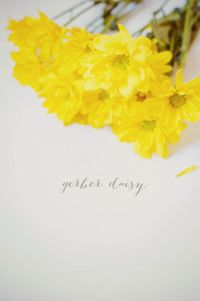 31 Days of Flowers Gerber Daisy