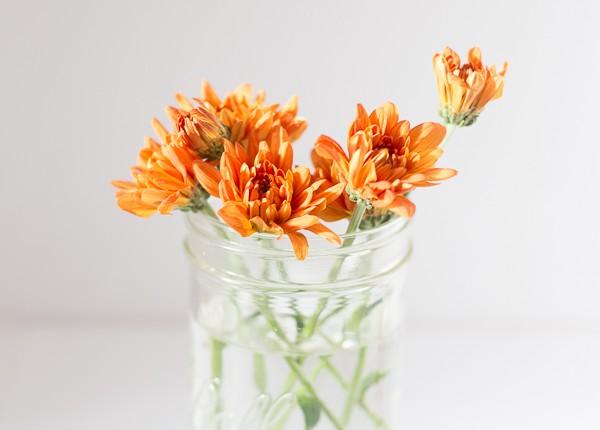 31 Days of Flowers- Just Destiny_-3