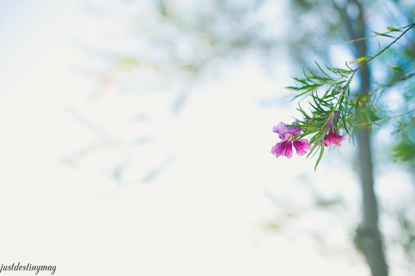 Tree Flower - Just Destiny_