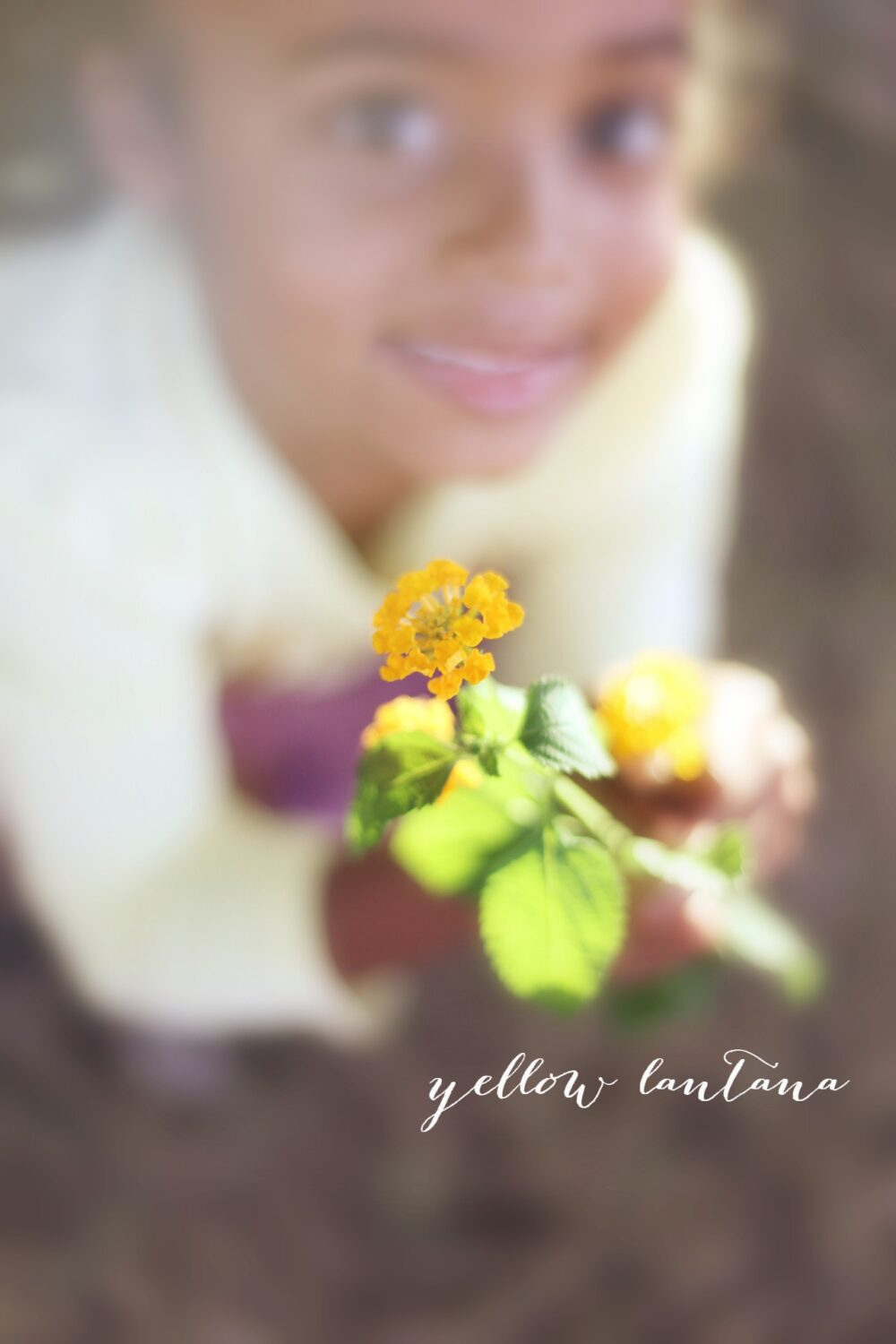 Day 4: Yellow Lantana