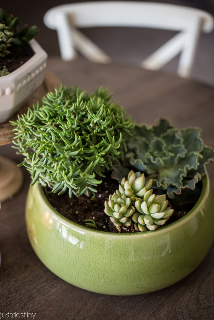 Planter Succulents for Better Homes and Garden-13