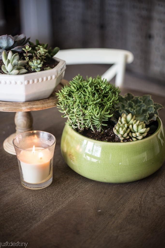 Planter Succulents for Better Homes and Garden-3