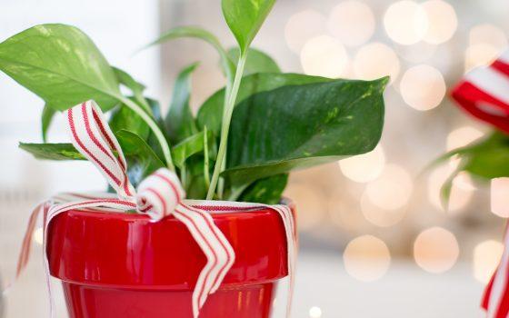 Christmas Gifts for Neighbors and Teachers