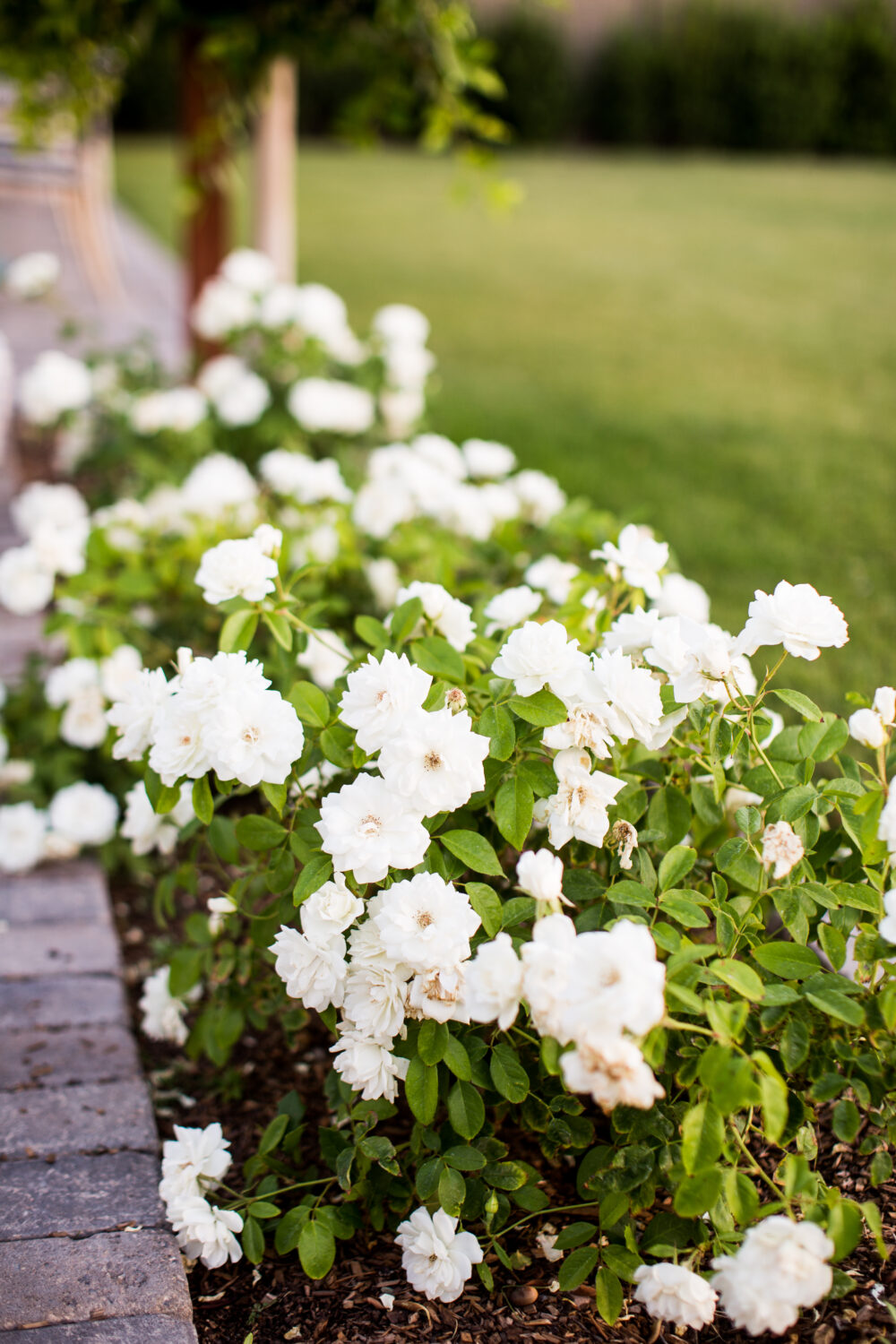 Favorite Shrubs and Bushes for a West Facing Backyard